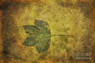 Poster featuring the digital art Leaf In Mud One by Randy Steele