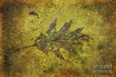 Poster featuring the digital art Leaf In Mud Two by Randy Steele