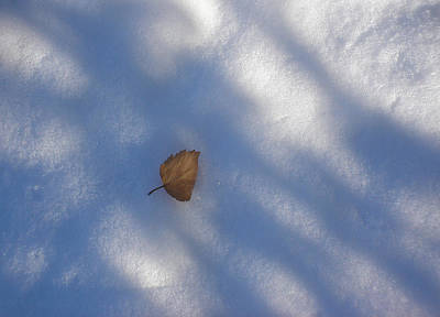 Leaf In Shadows Poster by Marilynne Bull