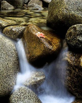Leaf On Rock-yosemite Valley Poster by Joe  Palermo
