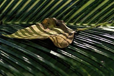 Leaf On Sago Palm Poster