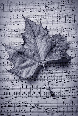 Leaf On Sheet Music In Black And White Poster by Garry Gay
