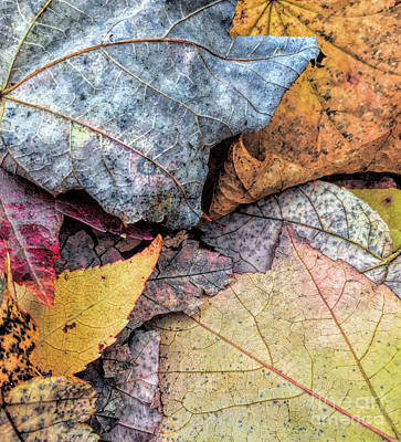 Leaf Pile Up Poster by Todd Breitling