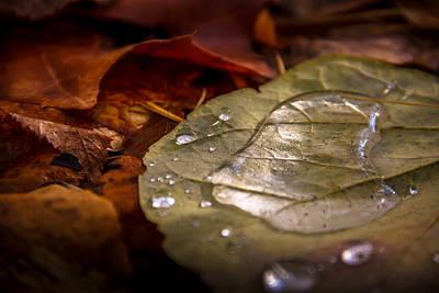 Leaf Pool Poster by Palosaari Photography