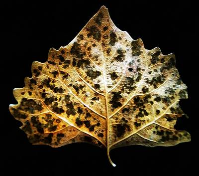 Poster featuring the photograph Leaf With Green Spots by Joseph Frank Baraba