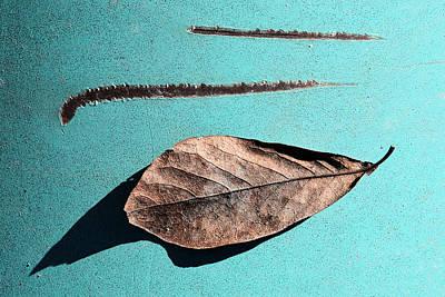 Leaf...foliage Poster