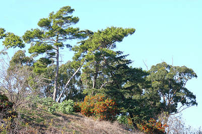 Leaning Trees On Hillside Poster