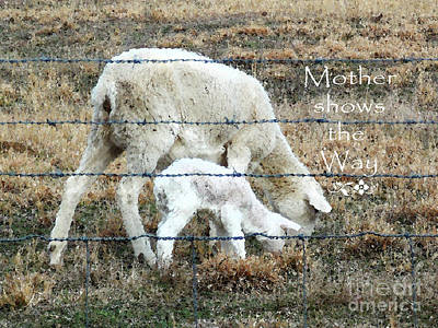 Learning From Mother Poster