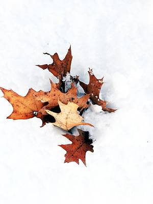 Leaves In Winter Poster