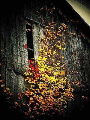 Leaves On An Old Barn Poster