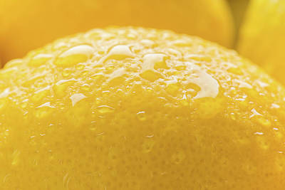 Lemon Zest Number 2 Poster by Steve Gadomski