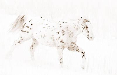 Leopard Appaloosa Runs In Snow Poster by Carol Walker