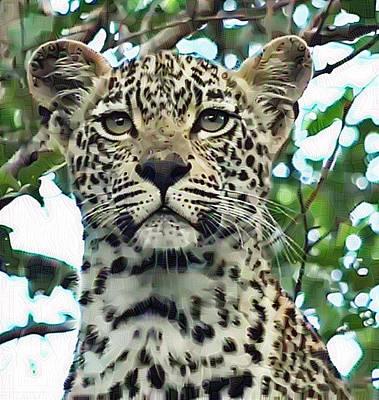 Leopard Face Poster