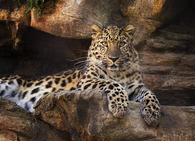 Leopard Photograph Poster by Stephanie McDowell