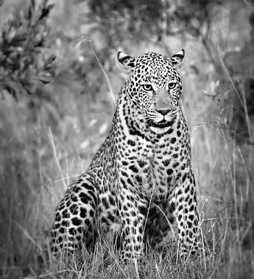 Leopard Portrait In Black And White Poster
