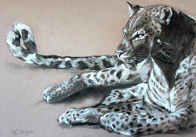 Leopard Sketch Poster by Derrick Higgins