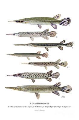 Lepisosteiformes Poster by Emily Damstra