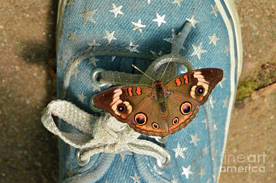 Let Your Spirit Fly Free- Butterfly Nature Art Poster by Robyn King
