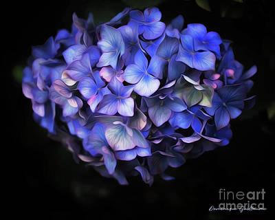 l'Hortensia bleu Poster