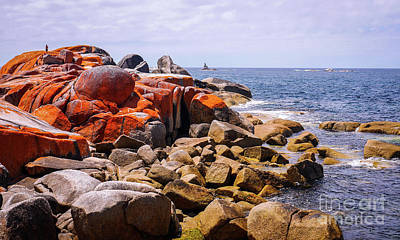 Lichen Covered Rocks Bay Of Fires Poster