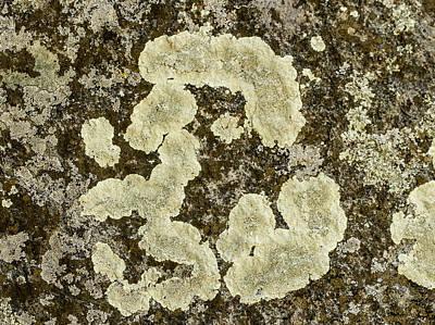 Lichen Design Poster