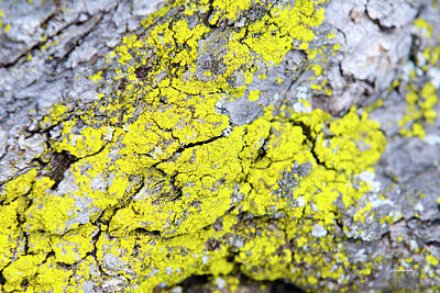 Poster featuring the photograph Lichen Pattern by Christina Rollo