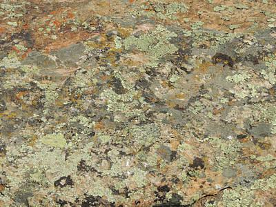 Lichens On Boulder Poster