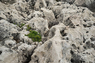 Life On Bare Rock - Weathered Limestone And Little Green Survivors Poster