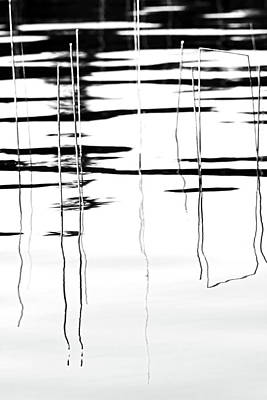Light And Shadow Reeds Abstract Poster