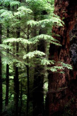 Light On Trees Poster