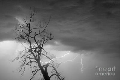 Lightning Tree Silhouette 29 In Black And White Poster