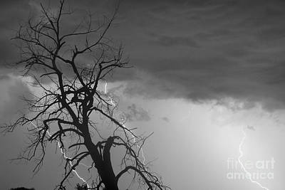 Lightning Tree Silhouette 38 Black And White Poster