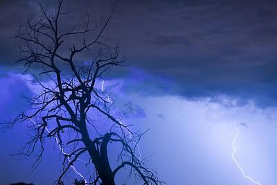 Lightning Tree Silhouette 38 Poster