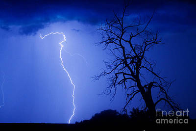 Lightning Tree Silhouette Poster