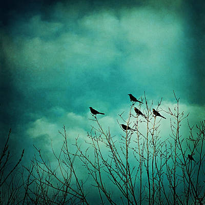Poster featuring the photograph Like Birds On Trees by Trish Mistric