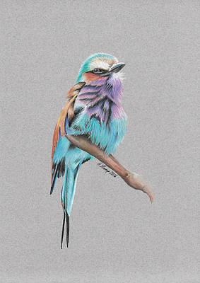 Poster featuring the drawing Lilac Breasted Roller by Gary Stamp
