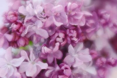 Poster featuring the photograph Lilac - Lavender by Diane Alexander