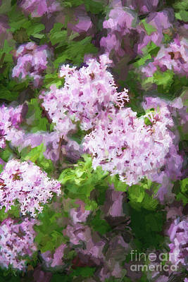 Lilac Lovelies Poster by A New Focus Photography