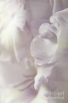Lilac Ruffles Poster by Ann Garrett