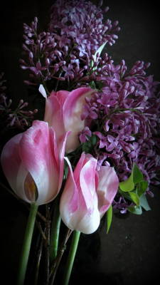 Lilacs  And Tulips Poster