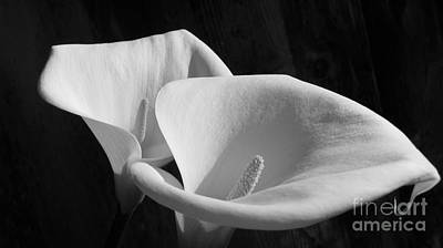 Lilies Bw Poster