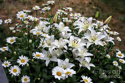 Lilies With Daisies Poster