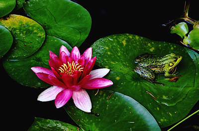 Lily And The Frog Poster by Debbie Oppermann