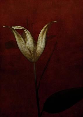 Lily Poster by Johan Lilja