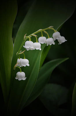 Lily Of The Valley 2 Poster