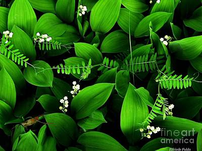 Lily Of The Valley Poster by Elfriede Fulda