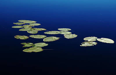 Poster featuring the photograph Lily Pads Floating On River by Debbie Oppermann