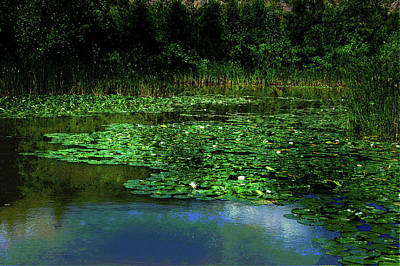 Lily Pond Poster by Elaine Manley