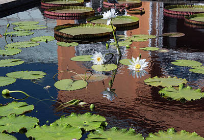 Poster featuring the photograph Lily Pond Reflections by Suzanne Gaff