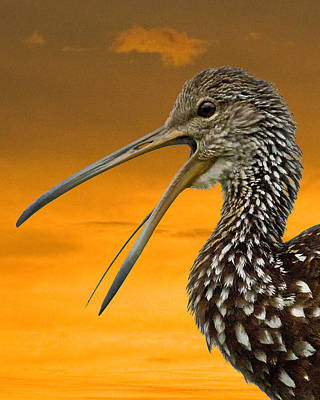 Limpkin At Sunset Poster by Larry Linton